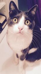 Kim, chat Gouttière