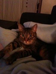 Kimi, chat Gouttière
