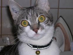 Kimy, chat Gouttière