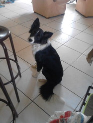 Kinder, chien Border Collie