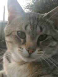 Kini, chat Gouttière