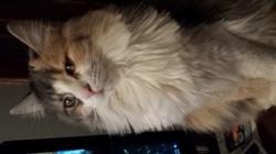 Kira, chat