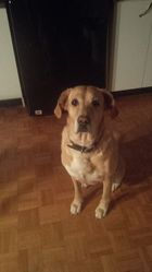 Kira, chien