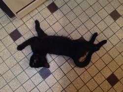 Kira, chat Gouttière