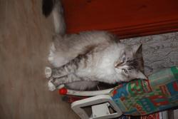 Kiri, chat