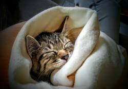 Kissy, chat Gouttière