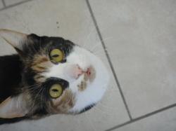 Kitten, chat