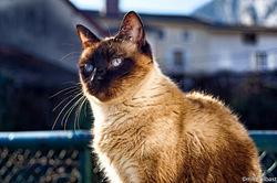 Kittie, chat