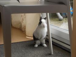 Kitty, rongeur Lapin