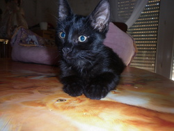 Kitty, chat Bombay