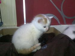 Kitty, chat Gouttière