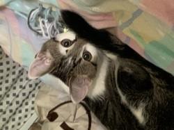 Kiwi, rongeur Lapin