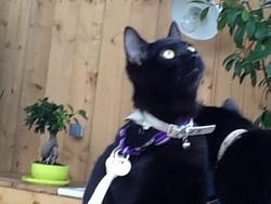 Kiwi, chat Gouttière