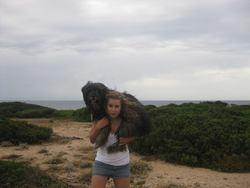 Kiwi, chien Berger des Pyrénées