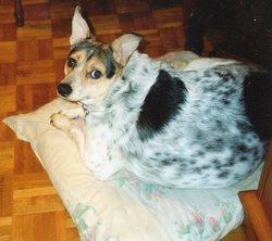 Kiwi0, chien