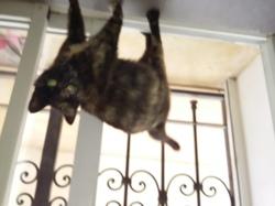 Kiyoshi, chat Gouttière