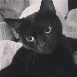 Klydie, chat Gouttière