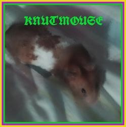 Reste En Paix Ma Mouse Knut, rongeur Hamster