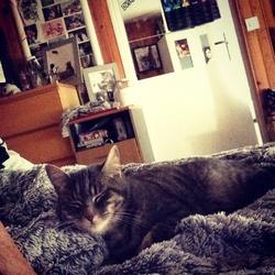 Koda, chat Gouttière