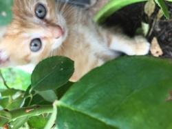 Kohlanta, chat