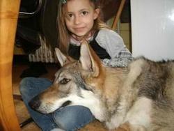 Koltrane , chien Chien-loup tchèque