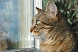 Kôma, chat Gouttière