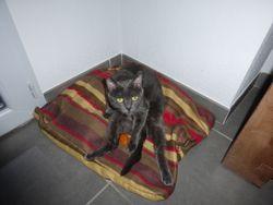 Kooki, chat Gouttière