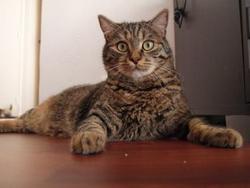 Kowaa, chat Gouttière