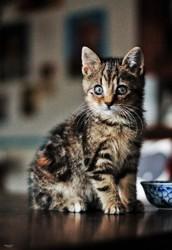 Kreatur, chat Gouttière