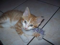 Krokmou, chat Gouttière