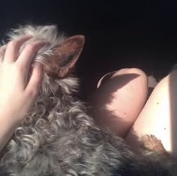 Krusty, chien Yorkshire Terrier