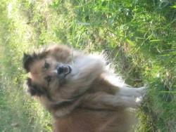 Krystal, chien