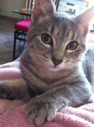 Kya, chat Gouttière