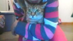 Kyara, chat Européen