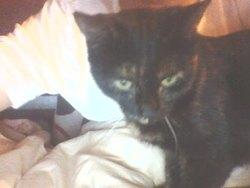 Kyie, chat