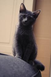 Kyo, chat Gouttière