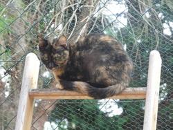 Kyra, chat Européen