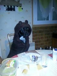 Kyron, chien American Staffordshire Terrier