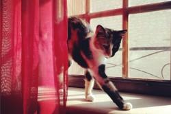 Kyti, chat