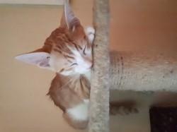 Kyubi, chaton Gouttière
