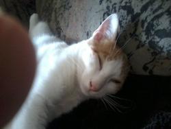 L'Asticot, chat Gouttière