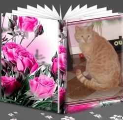 L'Inconnu Doudou, chat Européen