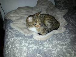 La Gamine, chat Gouttière