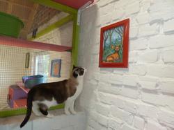 La Miniouchette, chat