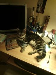 La Peste, chat Gouttière