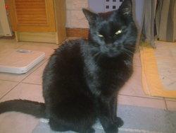 Lablanche, chat Gouttière