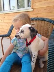 Lady, chien Dalmatien