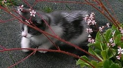 Lady, chat Gouttière