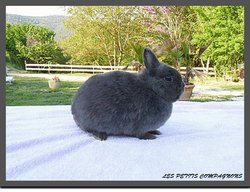 Lady, rongeur Lapin