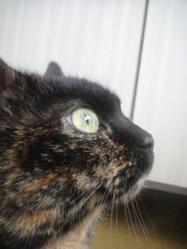 Laguine, chat Gouttière